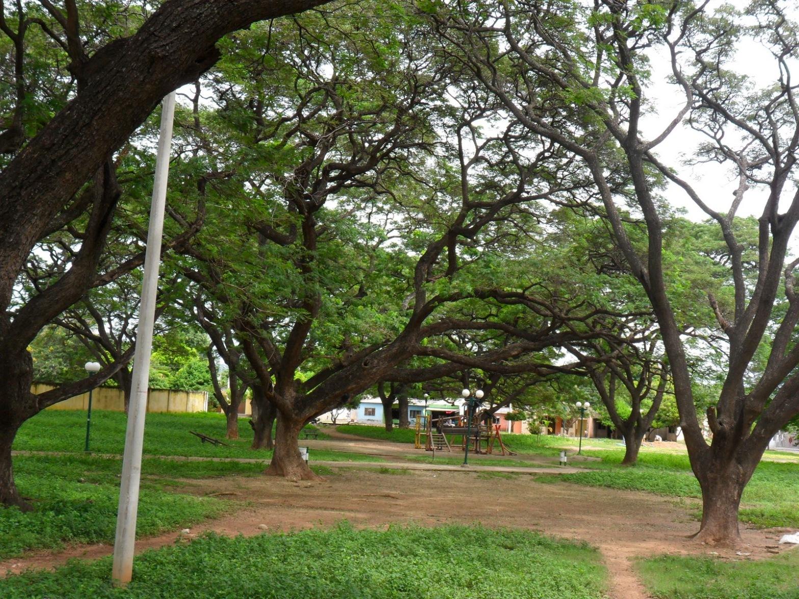 Parque arbolado en la ciudad de valledupar
