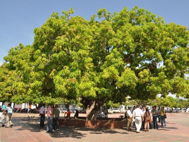 El popular palo e' mango - Plaza Alfonso López