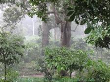 Lluvia en el bosque
