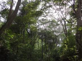 Bosque Manaure