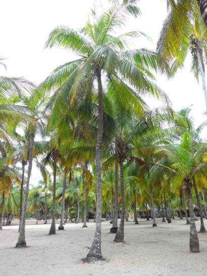 Playa El Matuy