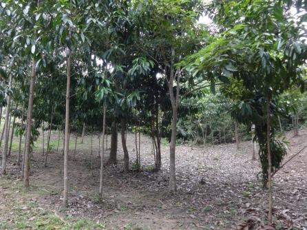 Bosque El Matuy
