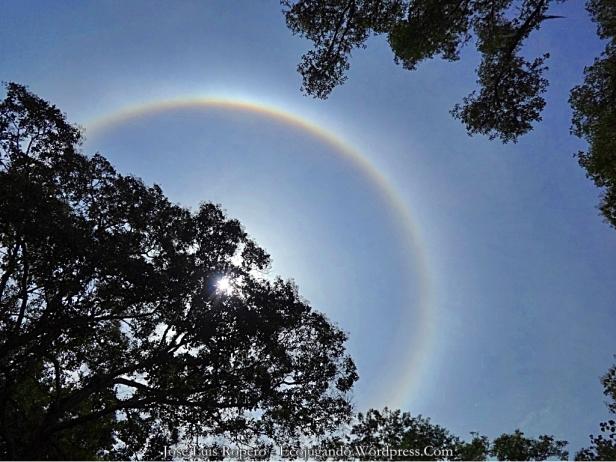 Halo solar o antelia