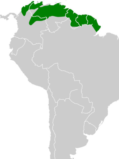 Ilustración: Wikipedia.Org