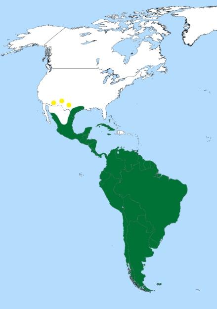 Ilustración: Wikipedia.