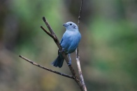 Foto: The Lilac Breasted Roller (Flicker).