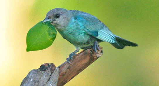 Foto: Karla Pérez León (Flickr).