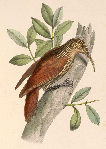 Ilustración: Marc Athanase Parfait Oeillet (1870).