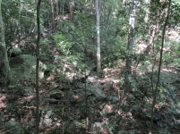 Bosque seco tropical (Ecoparque Los Besotes). Foto: Jose Luis Ropero.
