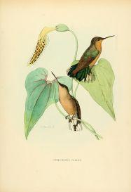 Ilustración: Louis Victor Bevalet (1877).