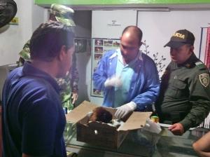 Momentos en que la cría de mono aullador era recibida por el veterinario. Foto: cortesía FF. MM.