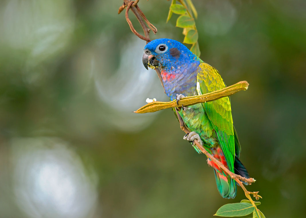Un loro alimentandose posado sobre una rama
