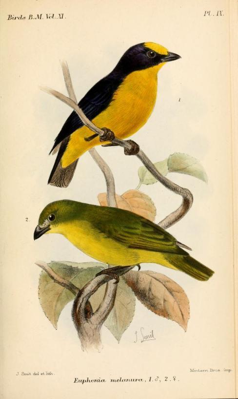 Ilustración: Joseph Smith (1886)