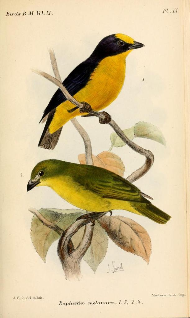 Ilustración: Joseph Smith (1886).