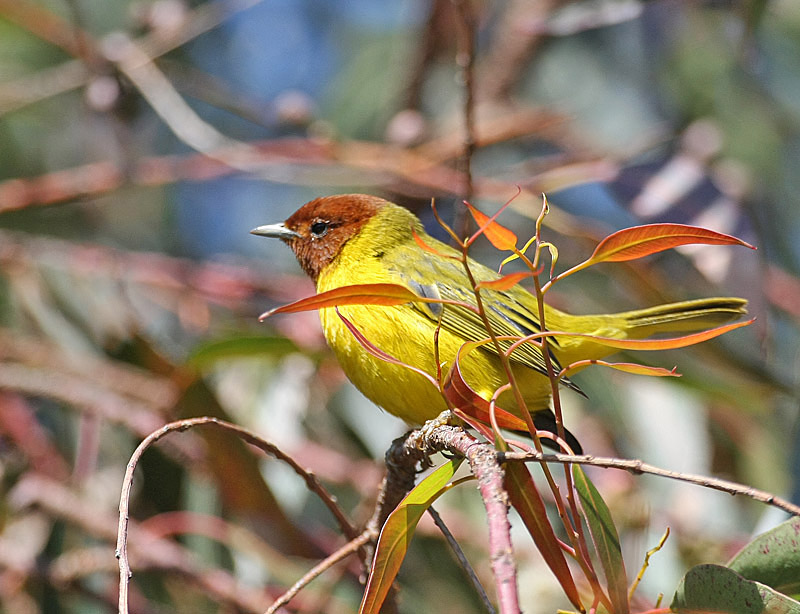 Foto: Glen Tepke (Pbase.com).