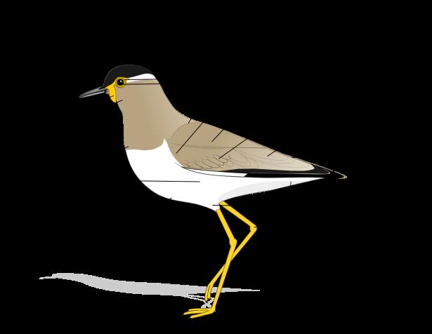 Anatomía de las aves.