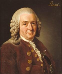 Carl von Linné.
