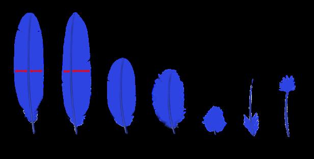 Tipos de plumas (clic para ampliar.