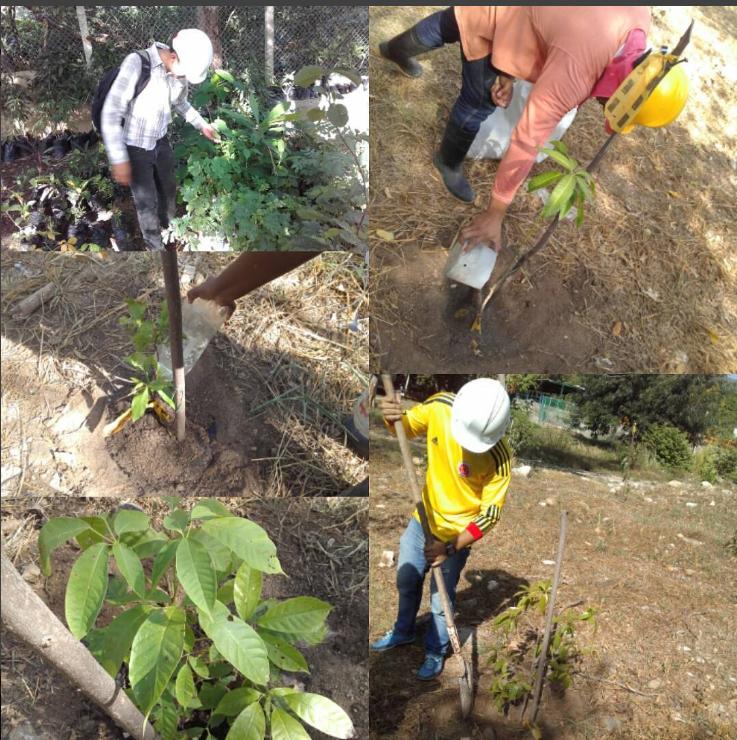 instagram-reforestacion