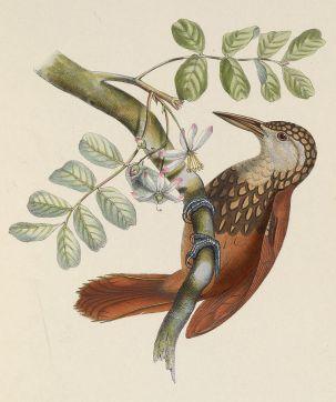 Ilustración: Des Murs (1849).