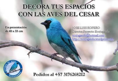 Decora con las aves del Cesar, por Jose Luis Ropero.