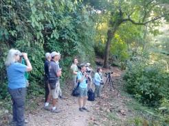 Profesor Álvaro Jaramillo (tercero de izq. a der.), guiando su grupo de birders. Foto: Gabriel Utria.