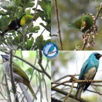 Conferencia 01. El birding y las aves del Cesar