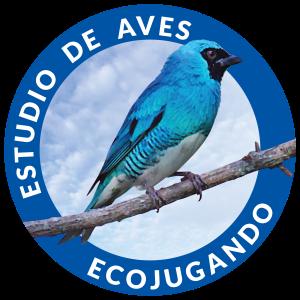 Logo Proyecto Ecojugando