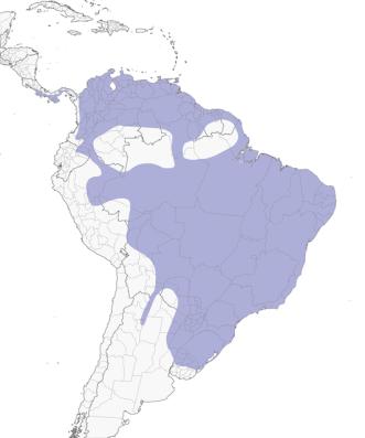 Milvago chimachima - Distribución
