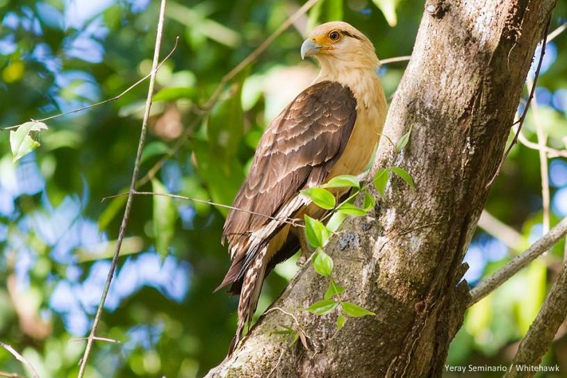 Más de 50 animales silvestres vuelven a la libertad en Cundinamarca