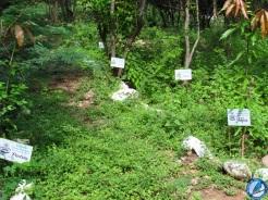 Bosques de paz, Ecoparque Los Besotes.