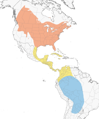 Distribución. Cornell Lab of Ornithology.