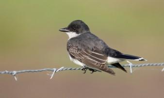 Cornell Lab of Ornithology.