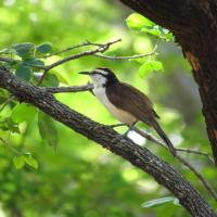 Los pájaros que avisté desde mi casa en este abril de pandemia