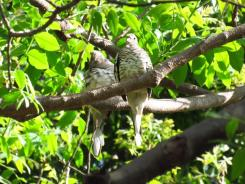 Dos palomas posadas entre la vegetacion
