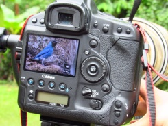 fiesta ornitologica 048
