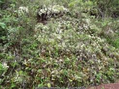 Vegetación Perijá IMG_6340