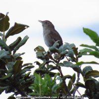 """Birding tour """"Endémicos de Valledupar y el Perijá"""", 6 días"""