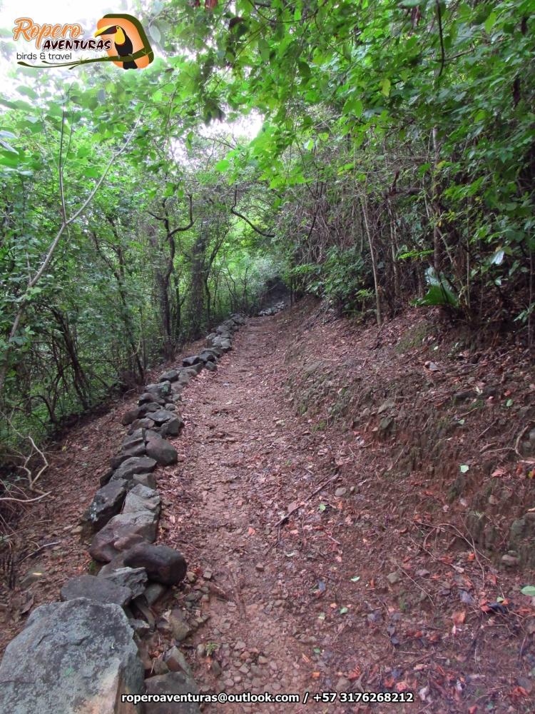 Bosque seco tropical valledupar