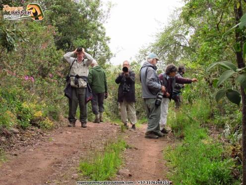 Birders in Perija