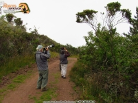Birders taking photos