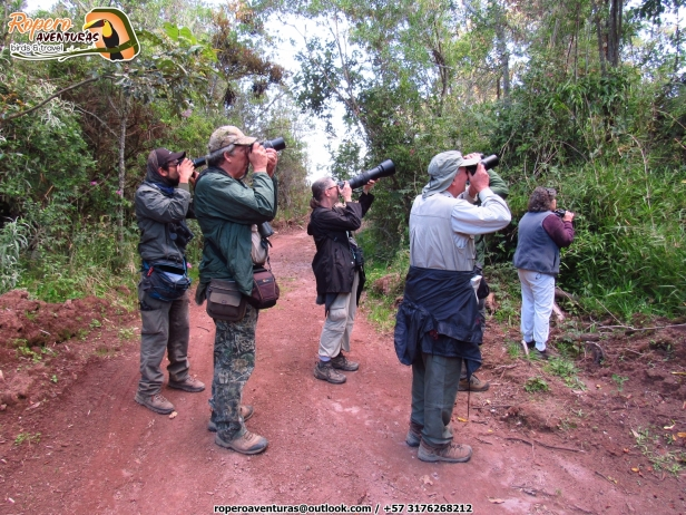 Birders in Perija mountains