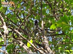 hormiguero endemico en Valledupar