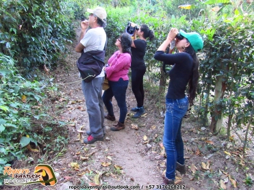 Pajareos en christmas bird count colombia