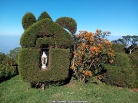 pinos podados con imagen de la virgen