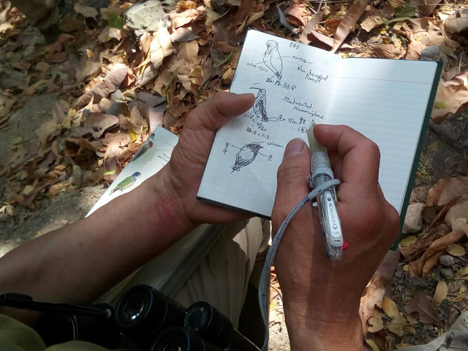 pajarero ilustra su libreta de campo