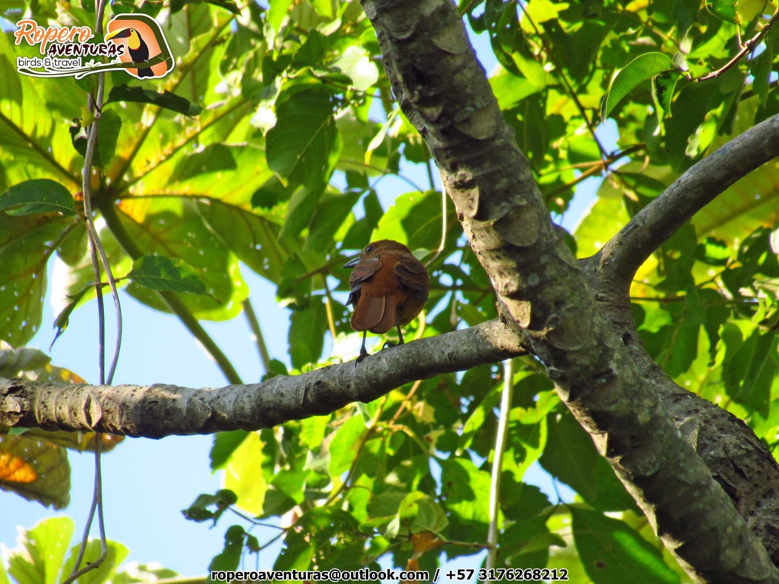 pajaro posado sobre una rama