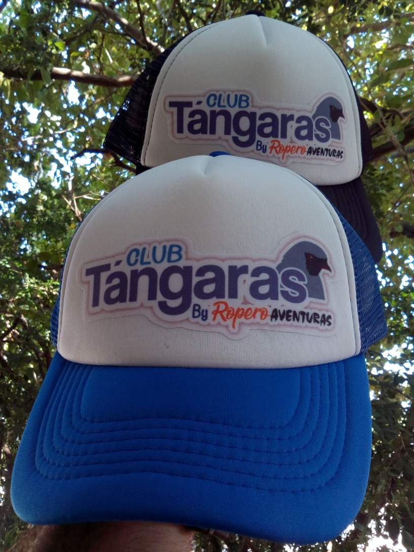Gorra oficial del club tangaras