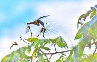colibri alimentandose en una flor