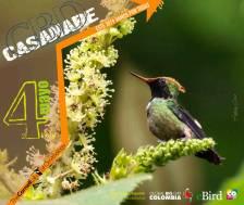 Global Big Day Casanare